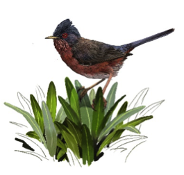 New article: Dartford Warbler, unplanned fires and biodiversity conservation