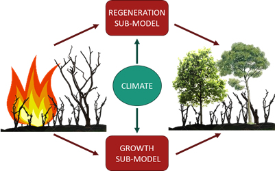 New article: From stand to landscape: modelling post-fire regeneration and species growth