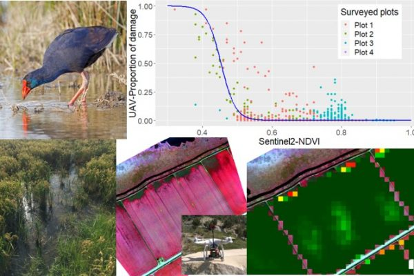 New article: Calibrating Sentinel-2 imagery with multispectral UAV derived information to quantify damages in Mediterranean rice crops caused by western Swamphen (Porphyrio porphyrio)