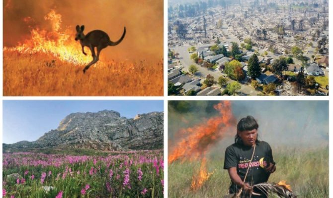 Fire and biodiversity in the Anthropocene
